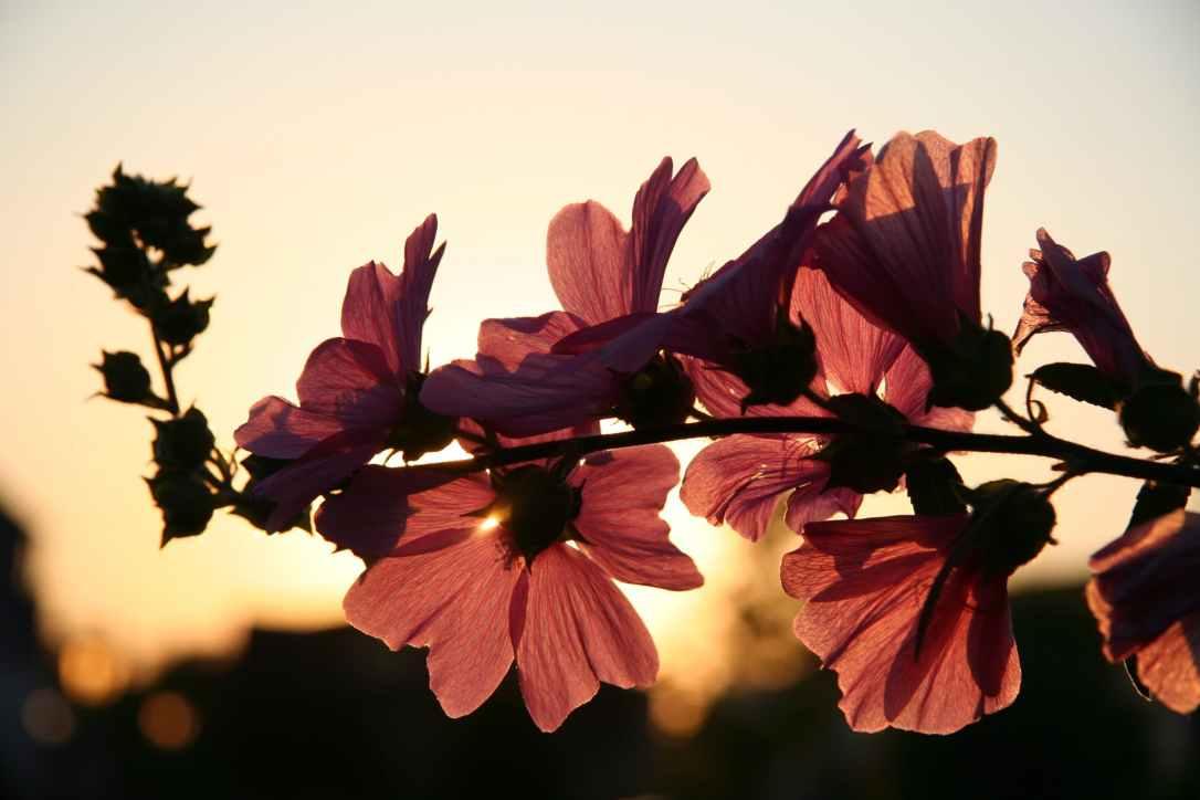 fioricontroluce.jpeg