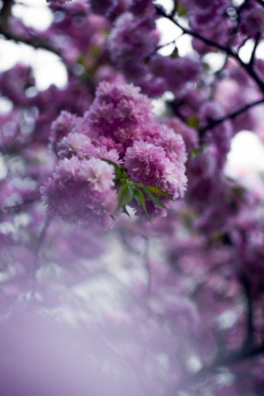 beautiful-bloom-blooming-1041098